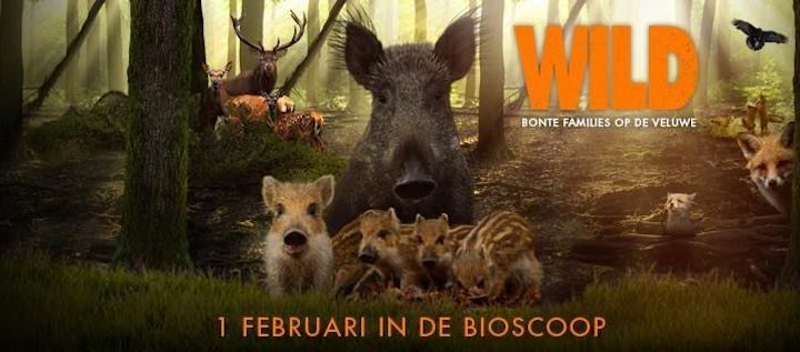 Filmtip: Wild op de Veluwe